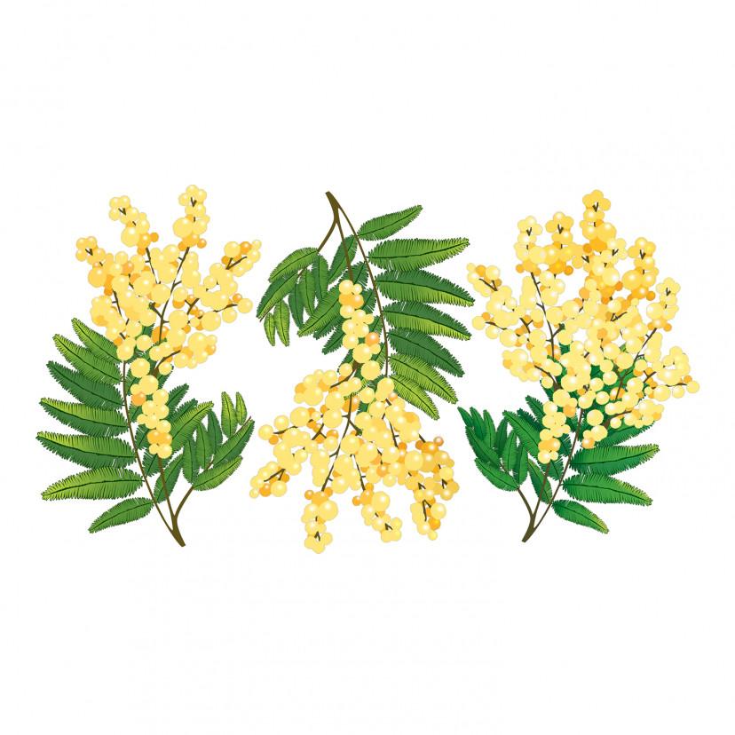 Vetrofania Mimose