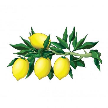Vetrofania Limoni